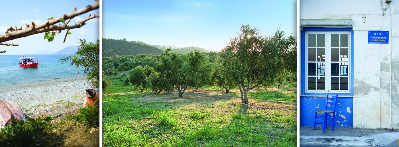 olijvenveld